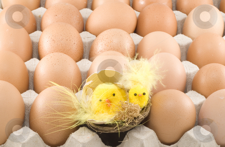 Easter Chickens stock photo, Easter chickens hatching among a lot of brown eggs by Petr Koudelka