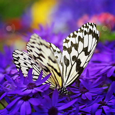Paradise of butterfly III stock photo,  by Tomo Photography
