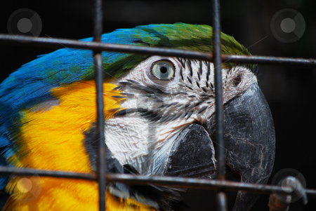Parrot stock photo,  by Sarka