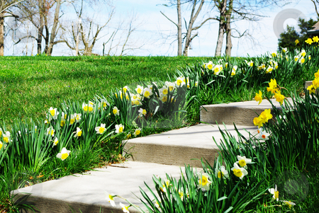 Sidewalk flowers stock photo, Rows of yellow jonquils, better known as Easter flowers, welcome family and guests by Sandra Fann