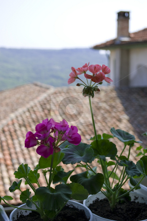 Flowers on a balcony stock photo, Pelargonium flowers on a balcony with distance house and nature view by Desislava Dimitrova