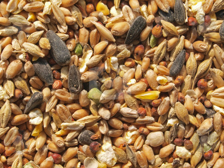 Wild bird seed. stock photo, Food put out in a garden to feed wild birds in the winter. by Ian Langley