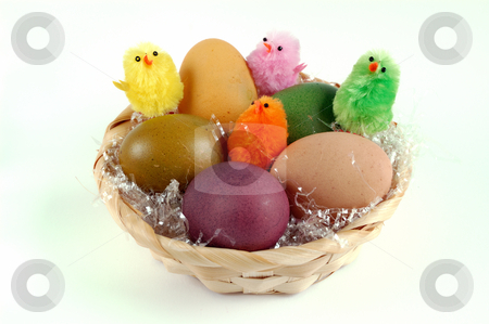 Easter eggs stock photo, Decoration with easter eggs and chicks over a white background by ALESSANDRO TERMIGNONE
