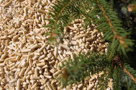 Wood pellets and red deal stock photo, Wood pellets green energy and branches of red deal by Roberto Marinello