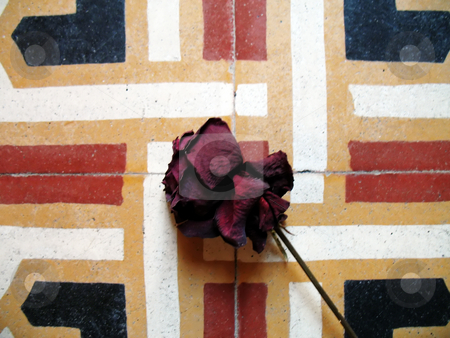 Rose on old floor stock photo, A dry rose on the tiles of an ancient floor by Roberto Marinello