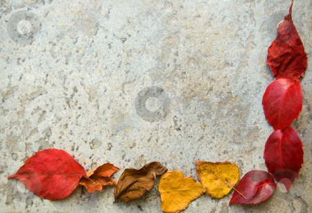 Fall leaves frame on grey stock photo, A colorful fall leaves frame on a gray stony floor by Roberto Marinello