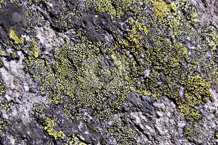 Lichen rock texture stock photo, Stone covered with green and gray lichens by Roberto Marinello