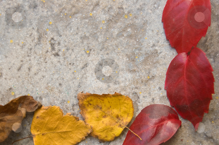Fall leaves frame stock photo, A colorful fall leaves frame on a gray stony floor by Roberto Marinello