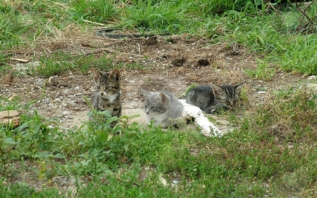 Three Kittens stock photo, These three kittens are relaxing in the cool evening after a long day of mischief. by Krystal McCammon