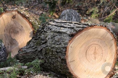 Firewood stock photo, Fresh cut maple fire wood by R Deron