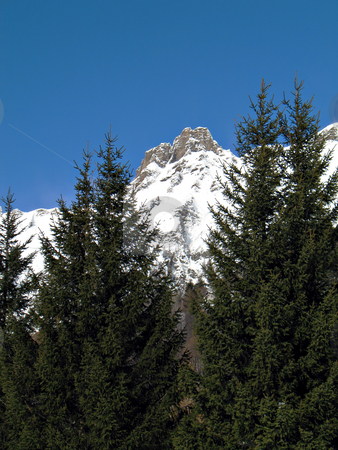 Snowy summits and firs stock photo, Winter landscape with snowy rocks and green firs in val d'Ossola, Italy by Roberto Marinello