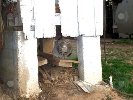 Watching Closely stock photo, This feral (semi-wild), barn cat is keeping a close watch while keeping safely out of sight. by Krystal McCammon
