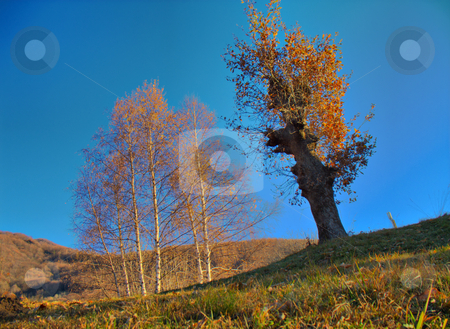 Trees in fall season hdr stock photo, Trees in fall season over a blue sky, HDR by Roberto Marinello
