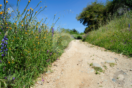 Scenic Jogging Path stock photo, A dirt running path winds through spring flowers and Oak trees in a rural neighborhood on a clear day. by Lynn Bendickson