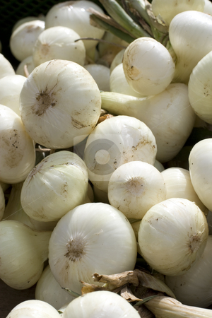Onions stock photo, Zwiebeln im Sonnenlicht auf einem Marktstand by Stefan Franz