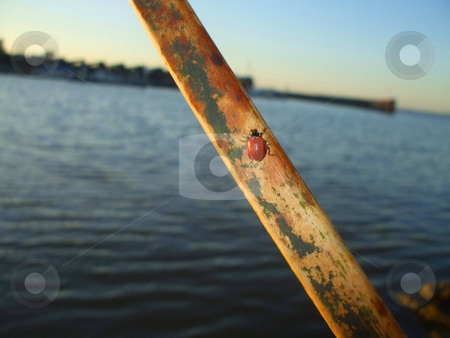Lady Bug stock photo,  by Michael Felix