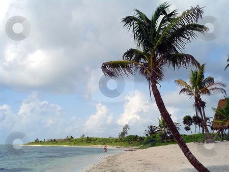 Palm and beach paradise stock photo, A tropical beach near Tulum, yucatan, Mexico by Roberto Marinello