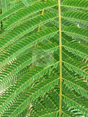 Fern leaf. stock photo, Close-up of a green fern leaf. by Horst Petzold