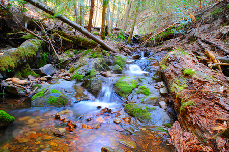 Peaceful Mountain Stream stock photo, A clear creek flows over moss covered rocks and decomcosing logs with the forest in the background.. by Lynn Bendickson