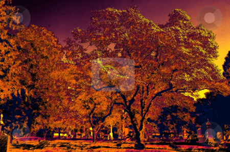 Trees stock photo,  by Andrew Kauffman