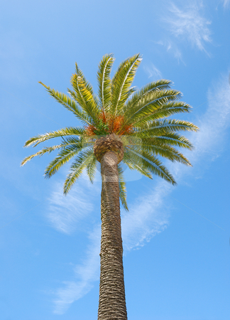 Sunlit Palm Tree stock photo, Sunlit palm tree with blue sky background. by Denis Radovanovic