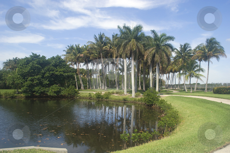 Path through the Palms stock photo, A path in a park through tall palm trees around a pond by Robert Cabrera