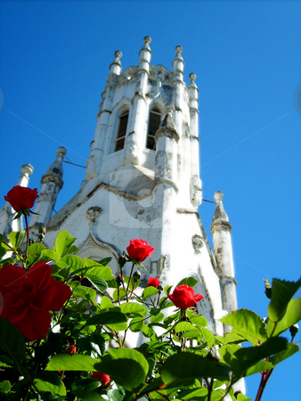 Holy Rose-a-ree stock photo,  by Stephen Kerin