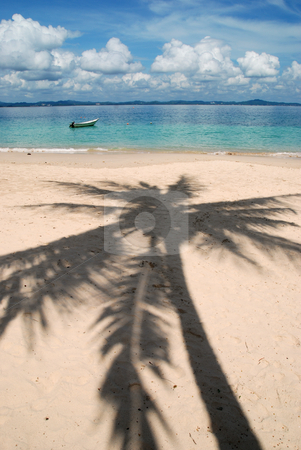 Shadow of a Coconut Tree stock photo,  by Norazshahir Razali