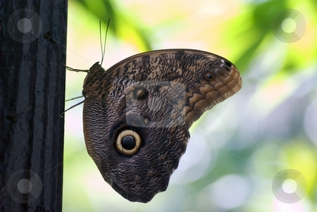ButterflEye Stand Out stock photo, Closeup profile of a butterfly by Charles Jetzer