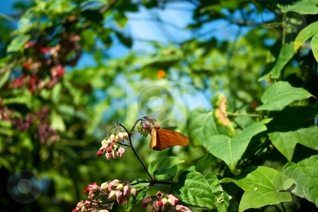 Butterfly Surrounded in Foliage stock photo, Butterfly surrounded by foliage by Charles Jetzer