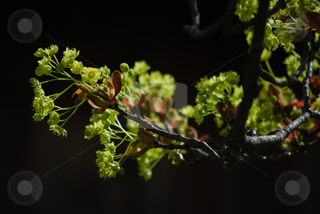Tree stock photo, Detail of a branch in spring by Sarka