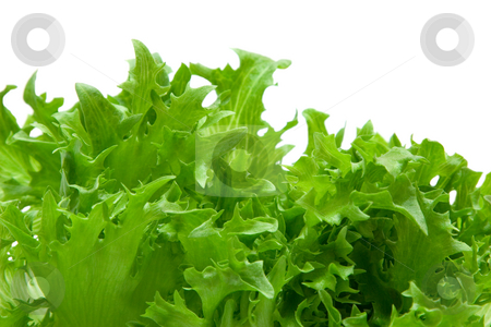 Lettuce stock photo, Lettuce by Andrey Butenko