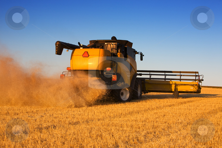 Combine work stock photo, A  combine harvester working a wheat field by Steve Mcsweeny