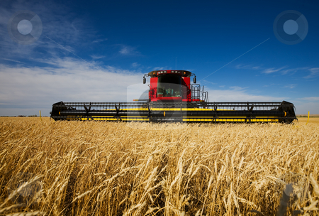 Harvesting wheat stock photo, Modern combine harvester working a wheat field by Steve Mcsweeny