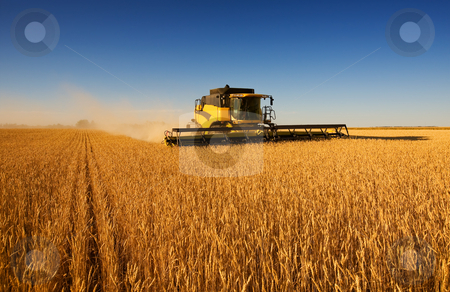 Harvest work stock photo, A modern combine harvester working a wheat field by Steve Mcsweeny
