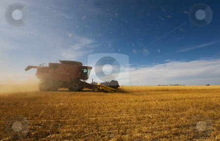 Working the crop stock photo, A combine harvester working with debris and dust flying by Steve Mcsweeny