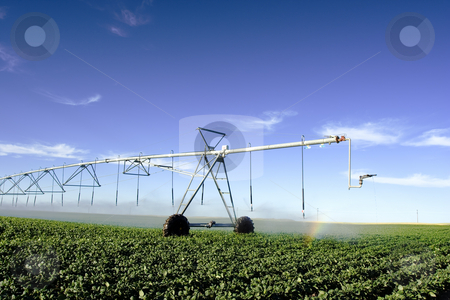 Irrigation stock photo, Pivot  irrigating a field by Steve Mcsweeny