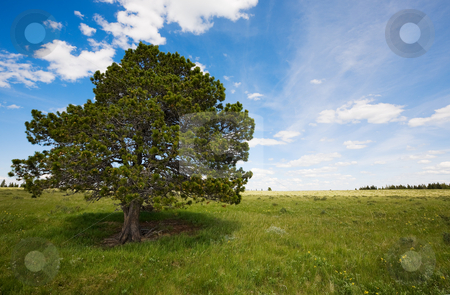 Spring landscape stock photo, Field landscape with trees and blue sky by Steve Mcsweeny