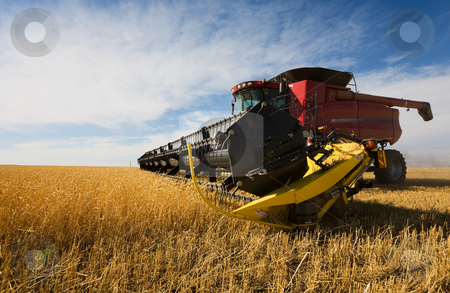 Harvesting stock photo, A  combine harvester working a wheat field by Steve Mcsweeny