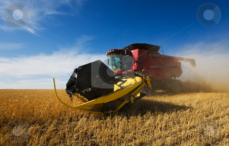 Harvesting wheat stock photo, A  combine harvester in a wheat field by Steve Mcsweeny