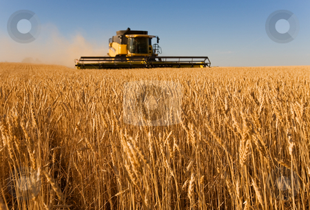 Working the harvest stock photo, Combine harvester working in a wheat field,(focus on front row of wheat) by Steve Mcsweeny