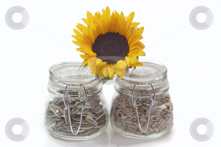 Sunflower seeds stock photo, Sunflower seeds on a bright background by Birgit Reitz-Hofmann