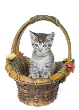 Kitten in a Basket stock photo, Tabby kitten in a stone garden basket.  Focus on kitten. by Brenda Carson