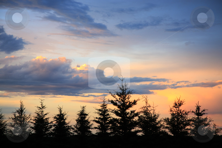 Windbreak Sunset stock photo, The sun sets as storm clouds begin to part over an evergreen windbreak.  Northern Saskatchewan, Canada. by Brenda Carson