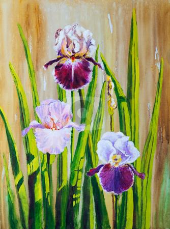 Irises stock photo, Irises:  An original work of art with acrylics on canvas. by Brenda Carson