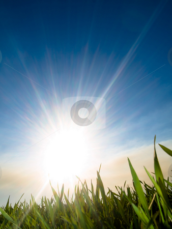 Beautiful fresh green wheat stock photo, Beautiful fresh green wheat  against sun at spring with blue sky and some clouds by Laurent Dambies