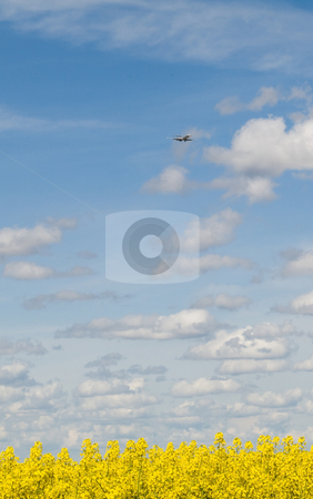 Rapeseed field and airliner approaching stock photo, Rapeseed field at spring under blue sky and clouds by Laurent Dambies