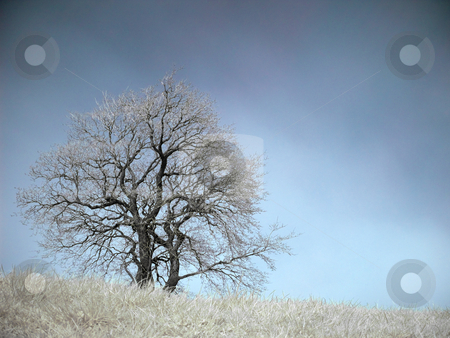 Infrared landscape stock photo, Isolated tree at Spring in infrared by Laurent Dambies