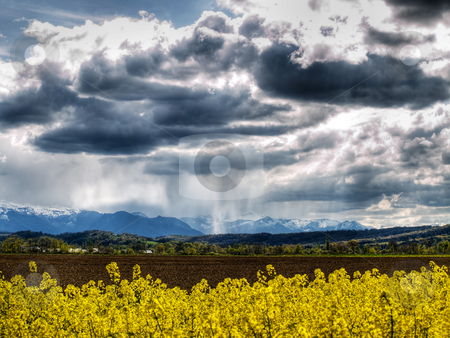 Rape field at Spring stock photo, Rape field at spring under stormy sky HDR processed by Laurent Dambies