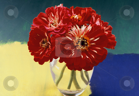 Almost painted Cinnias stock photo, Big red Cinnias in a Glasbowl with three coloured background, 4510x3095, 300 Pixel, 39,9MB by Ute Wingenfeld